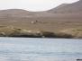 Expédition aux îles Ballestas